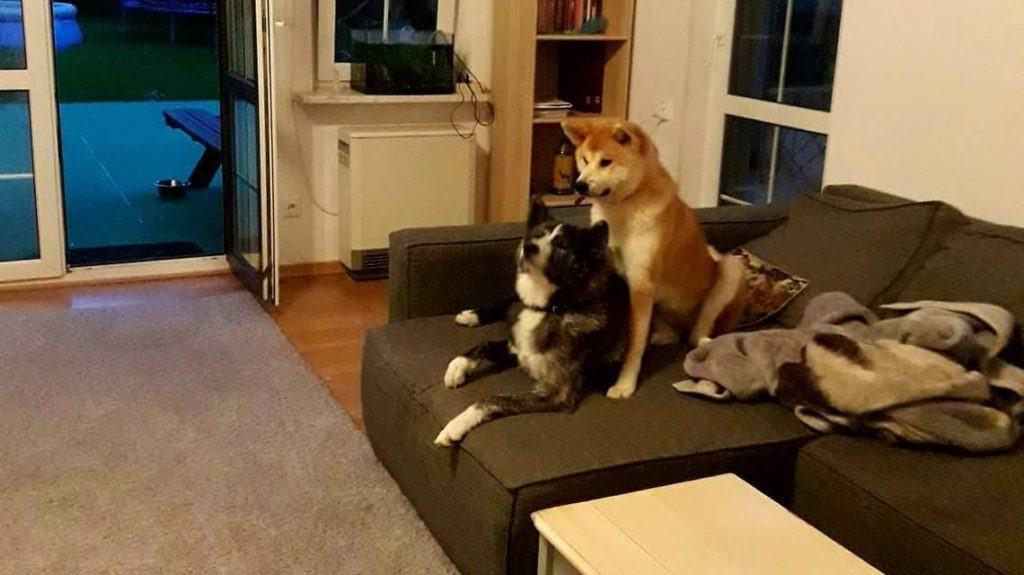 Psać czy nie psać z psem.