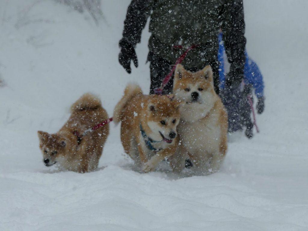 Wakacje, psów będą wakacje!