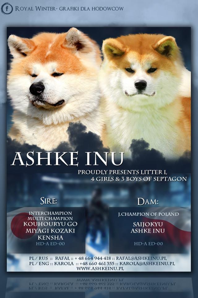 Hodowla Ashke Inu FCI Akita Kennel